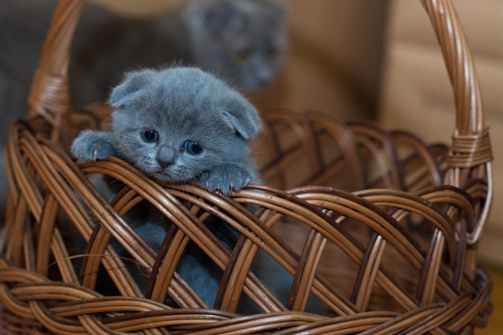 Crypto kittens