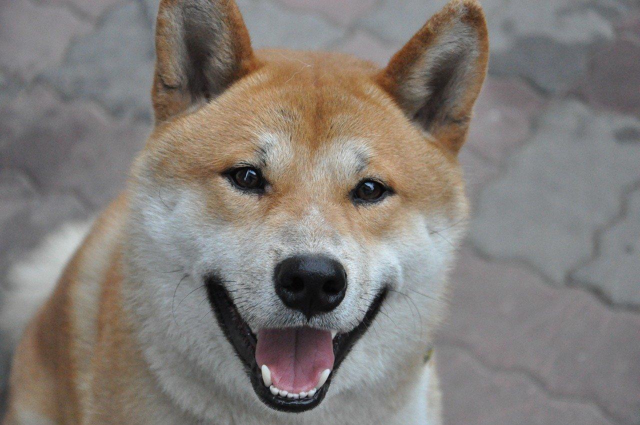 Dogecoin to jedna z popularniejszych kryptowalut z silną społecznością. Czy warto kupić Dogecoin?